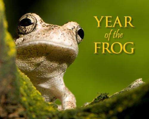 frog2_500x400